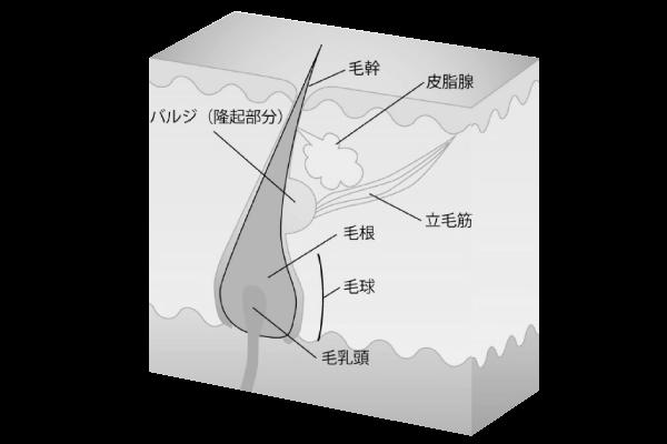 NPL(ニューパルスライト)図